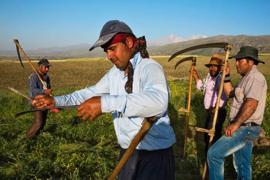 Travaux des champs près d'Ardabil