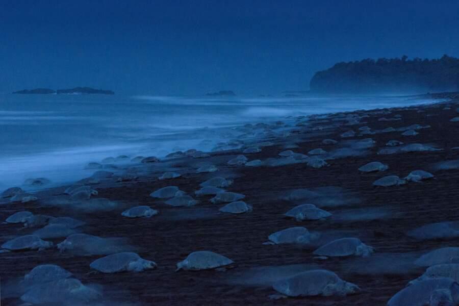 """La nuit des tortues / Ingo Arndt (Allemagne), finaliste """"comportement : amphibiens et reptiles"""""""