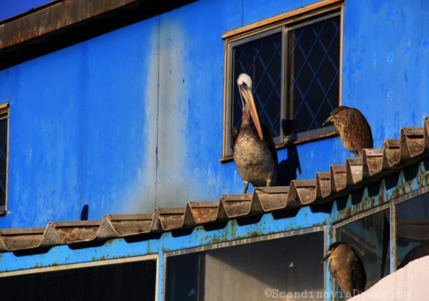 Chili - Découvrir Valparaiso, la perle du Pacifique