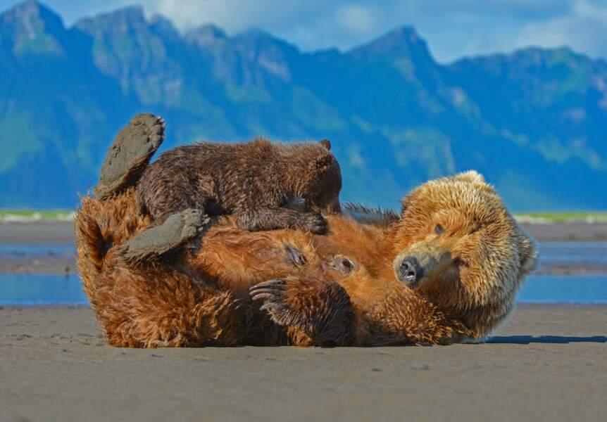 Maman grizzly et son petit dans la baie de Hallo, en Alaska