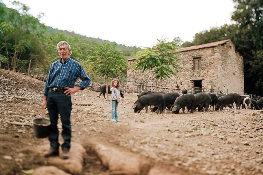 Éleveur de cochons corses