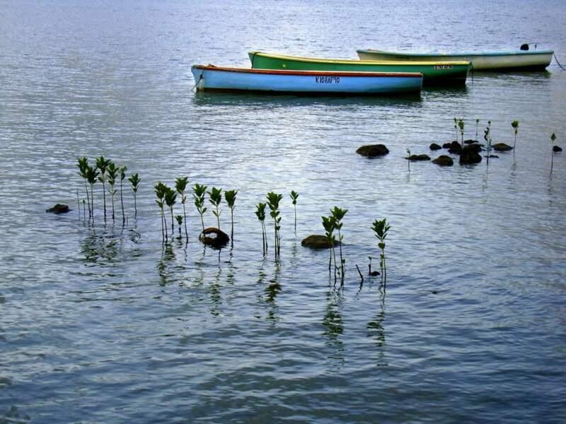 Photo prise sur l'île Maurice par le GEOnaute : skeudenn