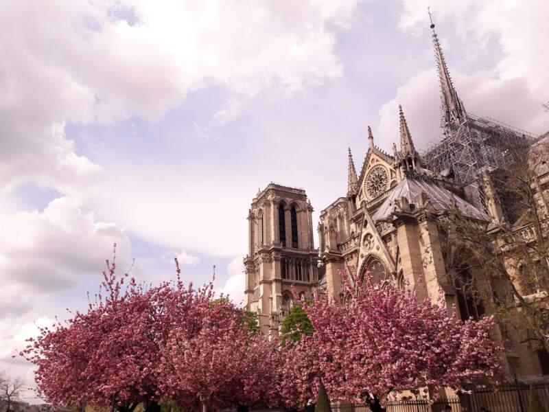 2019 : Notre-Dame ravagée par un incendie