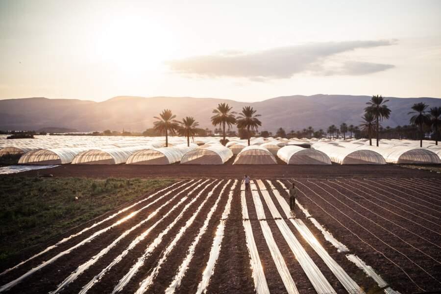 L'irrigation intensive, un fléau pour le Jourdain