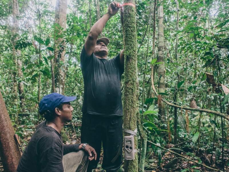 La protection accordée par les caboclos à la faune sauvage symbolise bien l'évolution des mentalités
