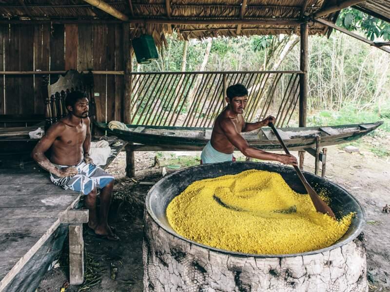 Avec le poisson, le manioc est l'une des bases de l'alimentation des caboclos