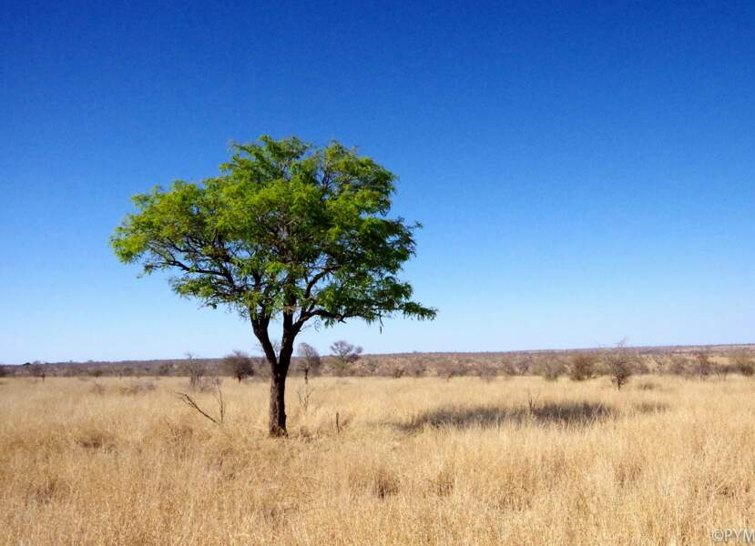 Afrique du Sud - 4 jours au Kruger national park
