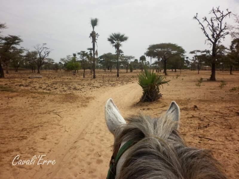 Randonnée au Sénégal - Oiseaux chanteurs, sable chaud, plages et chevaux