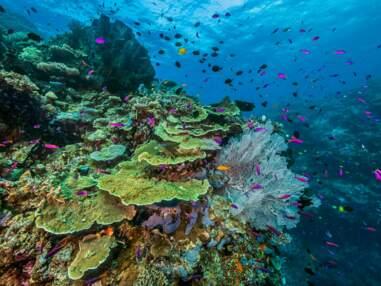 Dans les secrets du corail, en Papouasie Nouvelle-Guinée