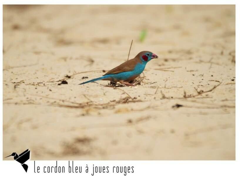 Photographier des oiseaux au Sénégal