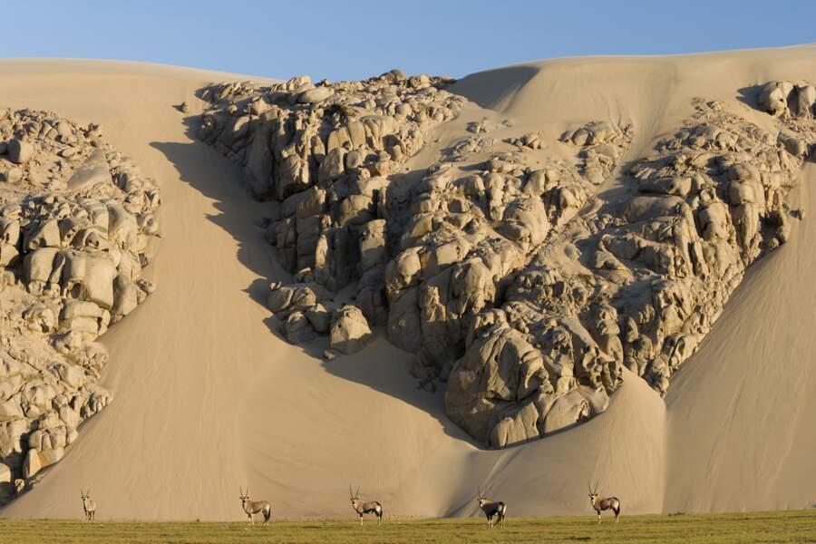 Lit de la rivière Hoarusib, Namibie : des sentinelles qui gardent les dunes
