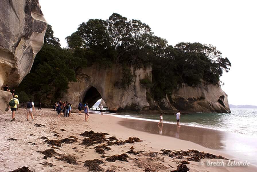 Nouvelle-Zélande - Cathedral Cove, entre Terre et Mer