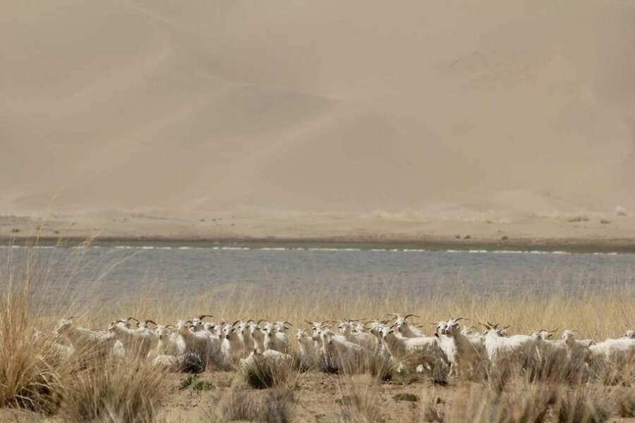 Photo prise dans le désert de Badain Jaran (Chine) par le GEOnaute : Yugo