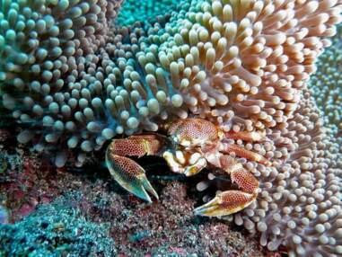 Les plus belles photos de la Communauté : plongée sous-marine