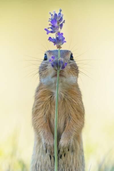 En Autriche, un écureuil planqué derrière sa brindille