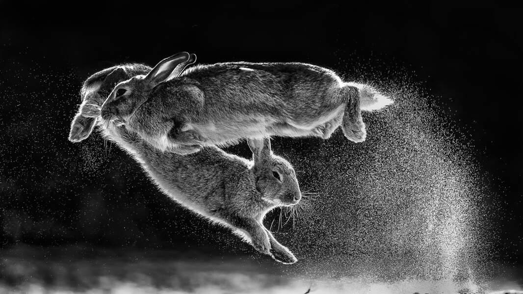 En Hongrie, des lapins bondissants