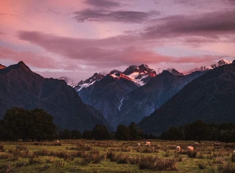 Crépuscule rose sur le Mont Cook