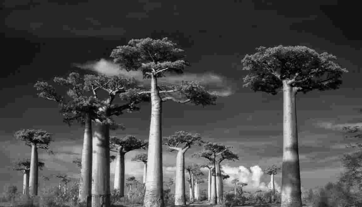 Arbres centenaires : des trésors de biodiversité