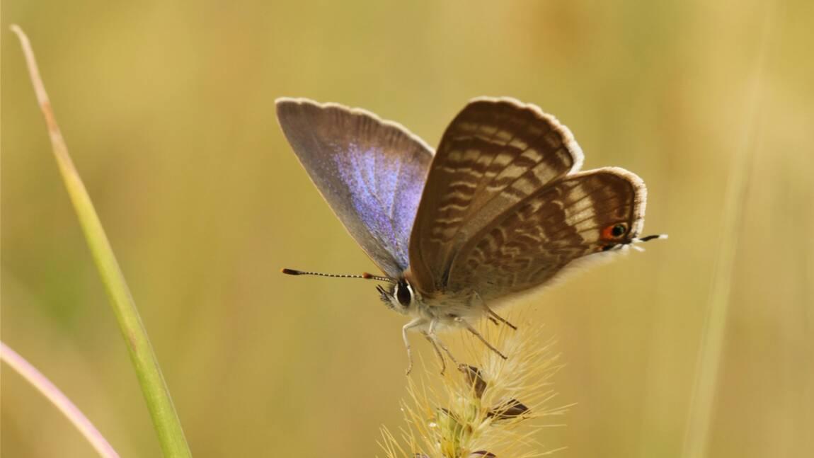 Au Royaume-Uni, des insectes exotiques témoignent du changement climatique