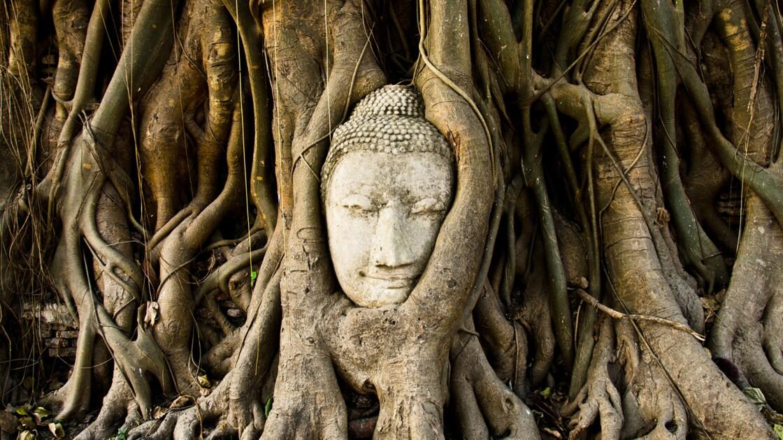 Dix arbres qui invitent au voyage