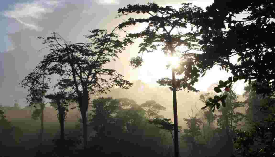 Communauté photo : la Guyane, écrin sauvage en Amazonie française