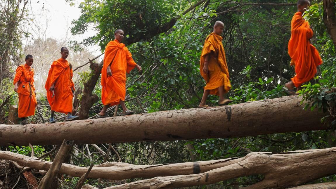VIDÉO : Au Cambodge, le combat d'un moine pour sauver les forêts