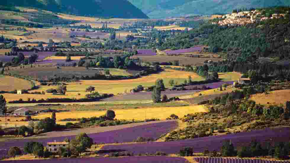 Agroécologie : la solution pour une agriculture verte ?