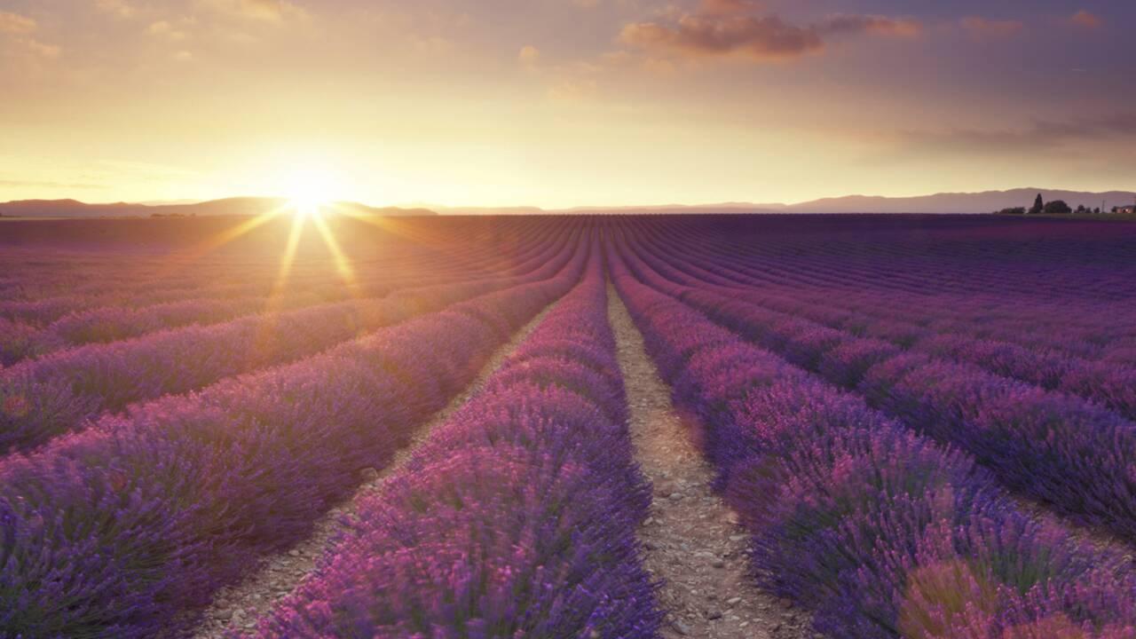 Quiz spécial Provence
