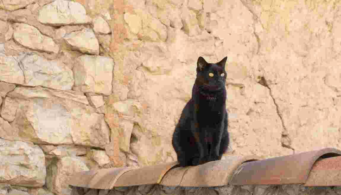 chatte noire léché Tamil lesbiennes sexe histoires