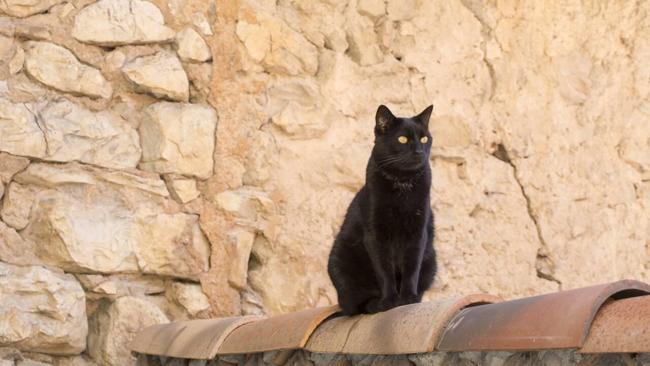 """""""Le chat ne nous appartient pas, c'est nous qui lui appartenons"""""""