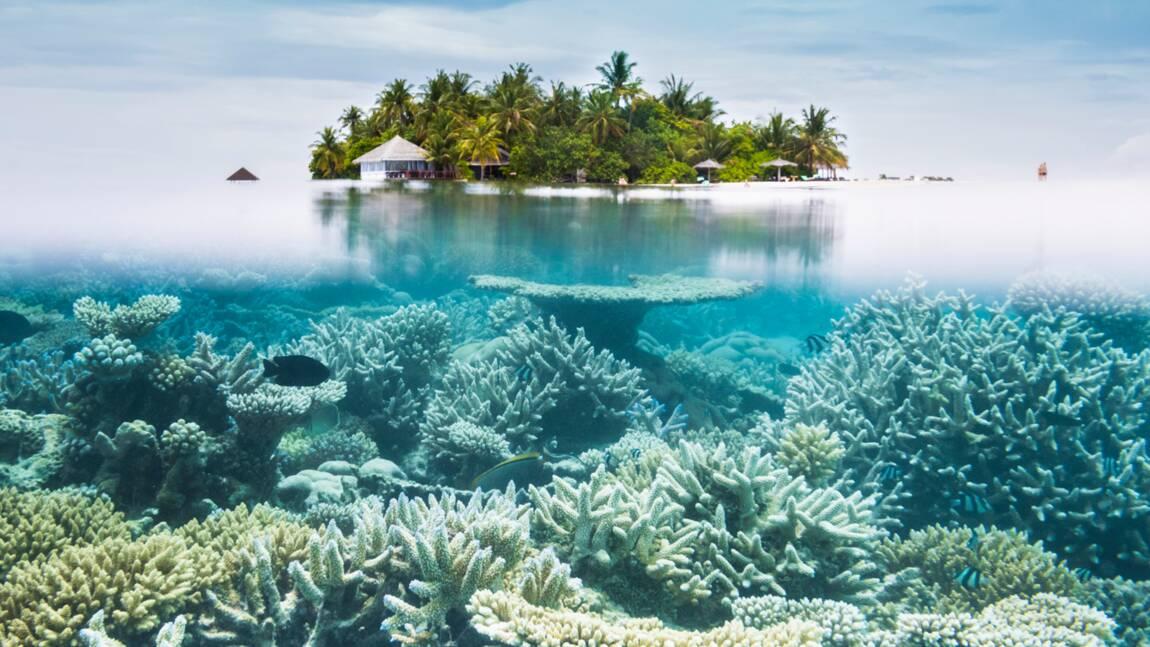 Blanchiment des coraux, inondations, canicules... La menace El Niño