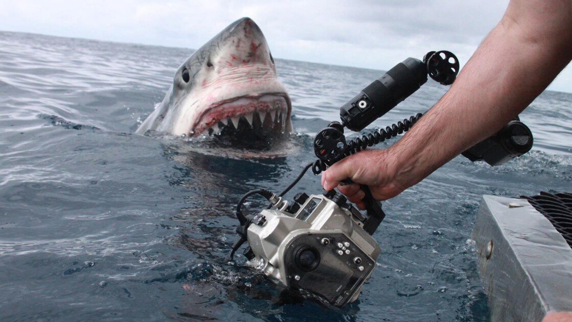 Rencontre avec un grand requin blanc