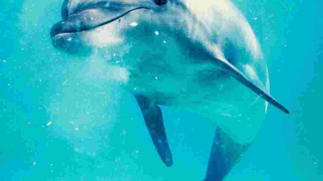 Océans : comment communiquent les cétacés
