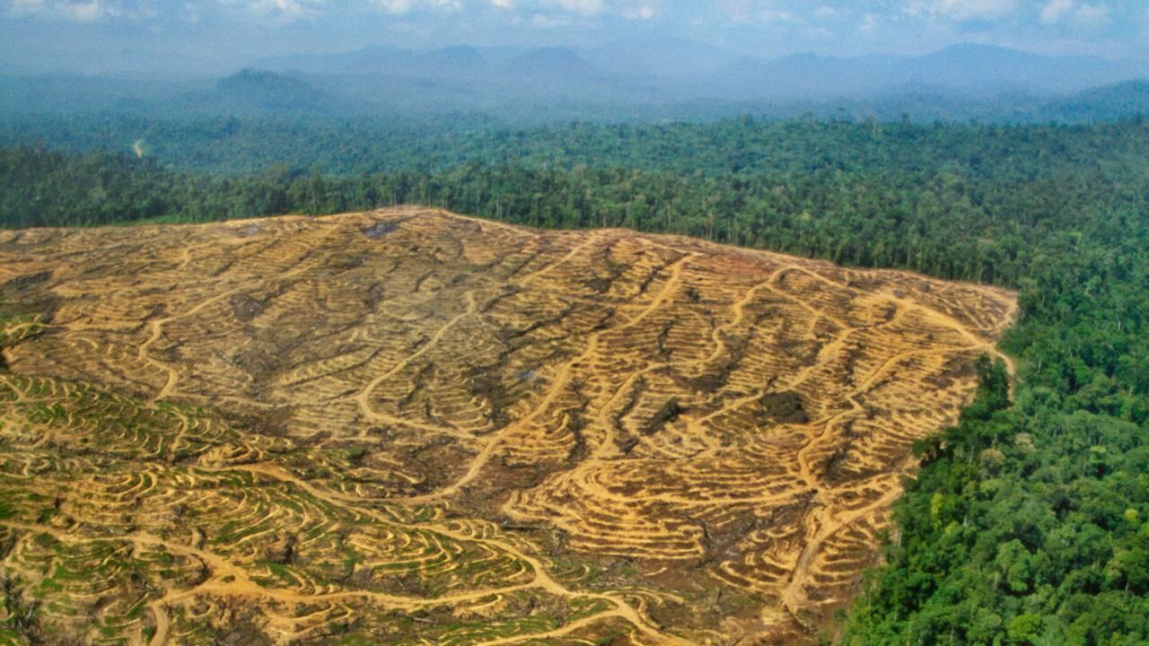 L'huile de palme est-elle mauvaise pour la planète ?
