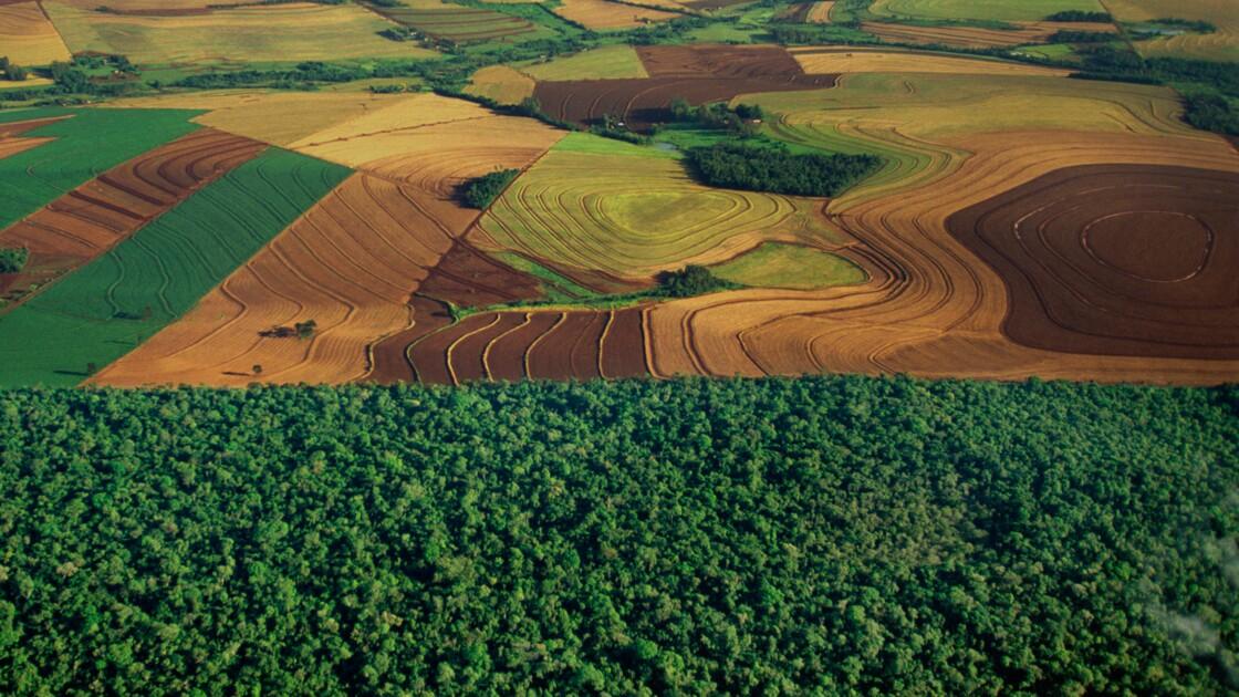 La diminution des forêts est-elle inquiétante ?