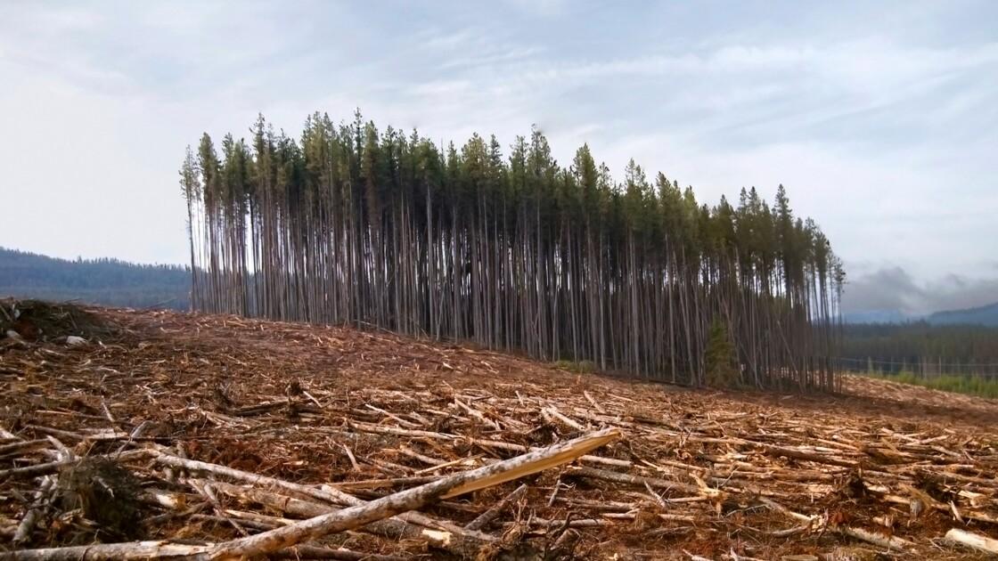 Déforestation : surveillez l'état de nos forêts en temps réel