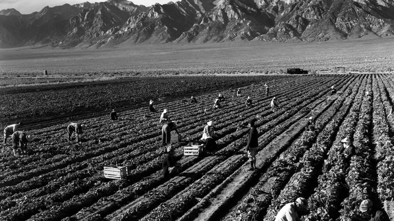 L'histoire oubliée des camps japonais en Californie