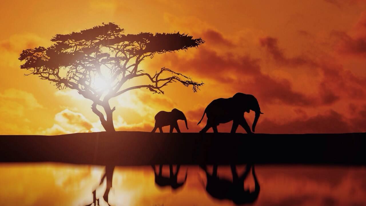Quiz spécial éléphants