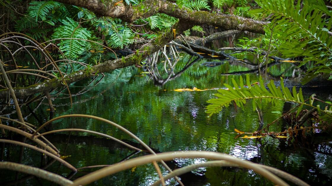 Les solutions de la nature face à l'urgence climatique