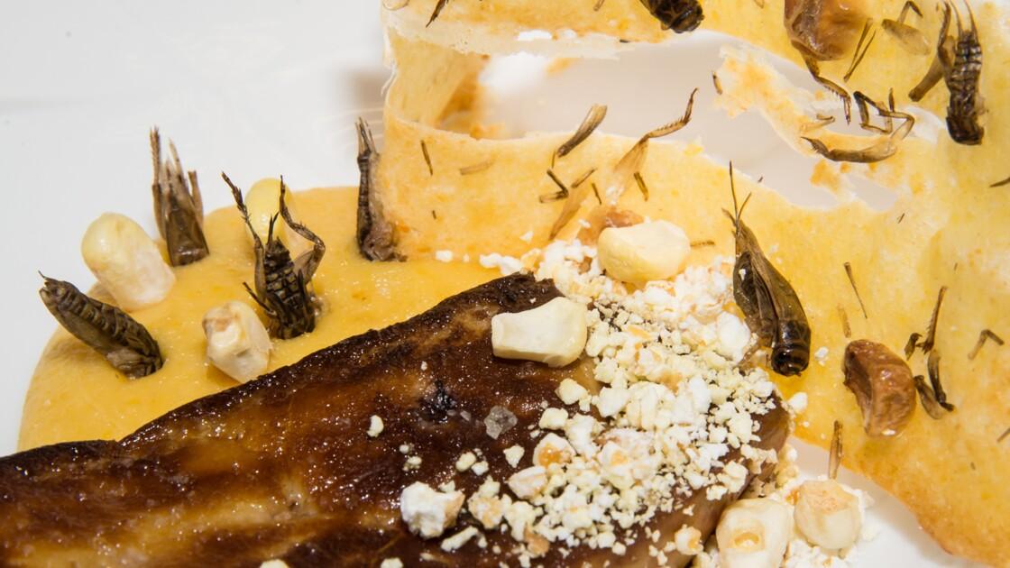 Des insectes dans nos assiettes ?