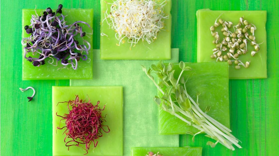 E.coli : le principe de précaution est-il la bonne solution ?