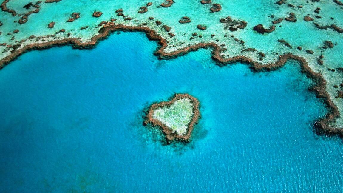 Australie : plongée dans la Grande barrière de corail