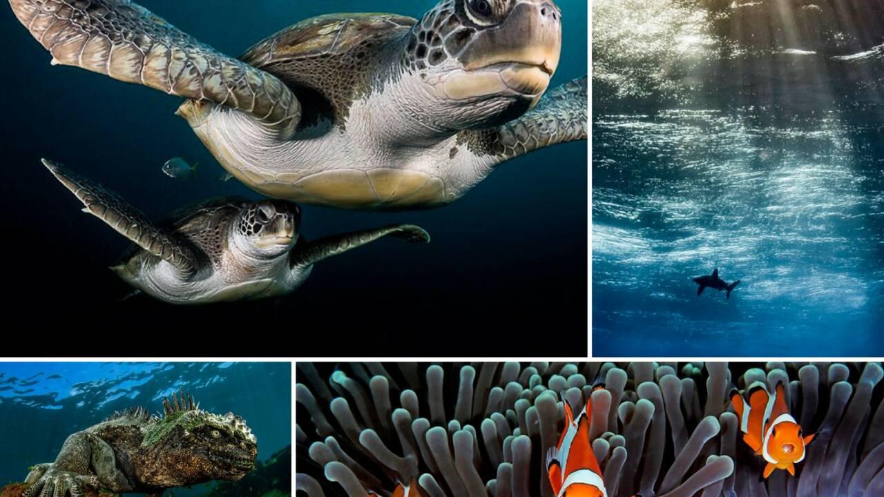 15 photos sous-marines étonnantes