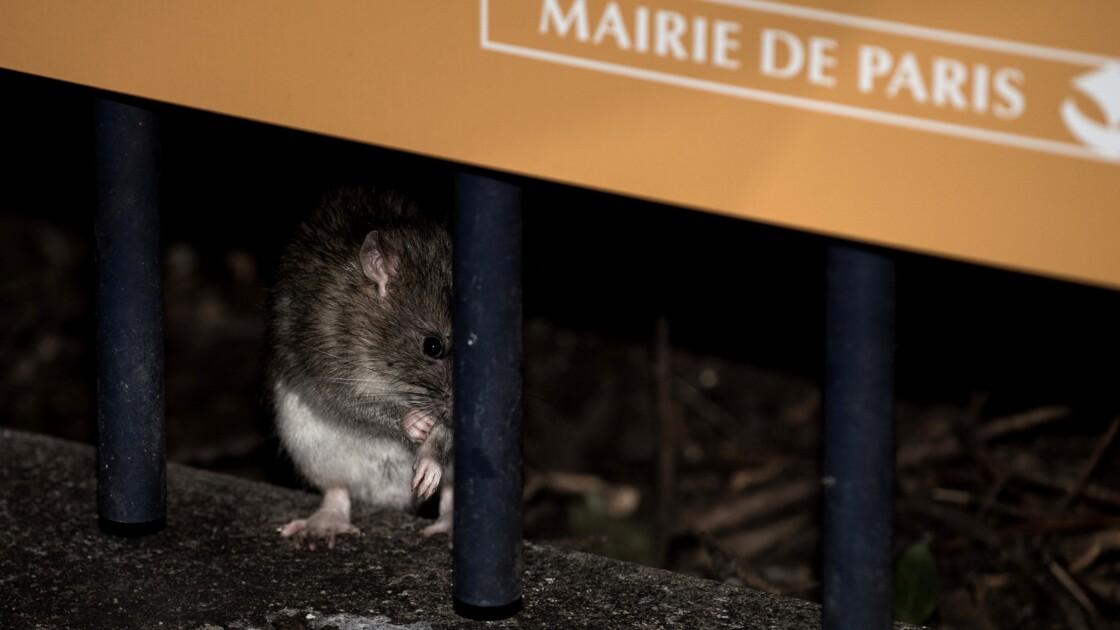 Paris veut être plus propre, les amendes vont pleuvoir