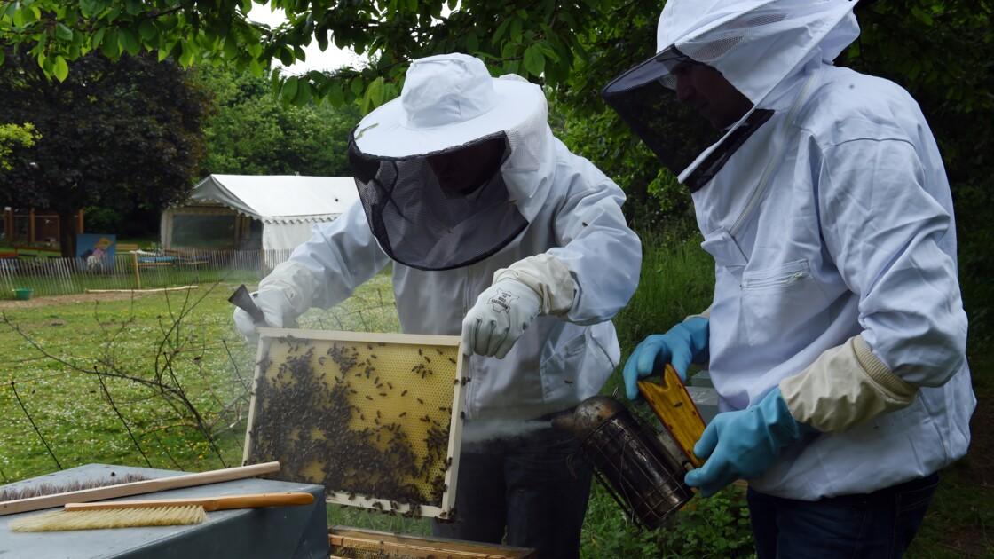 """17 villes favorables aux abeilles labellisées """"ApiCité"""""""
