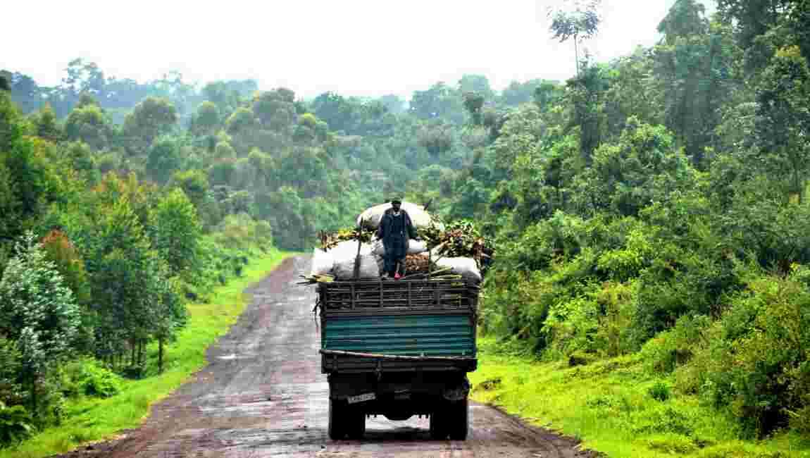 COP23: l'accord de Paris passe par les tourbières du Congo