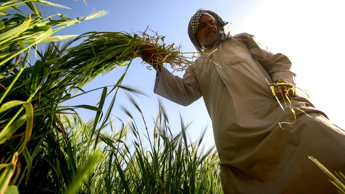 Dans le sud agricole de l'Irak, la sécheresse s'accentue