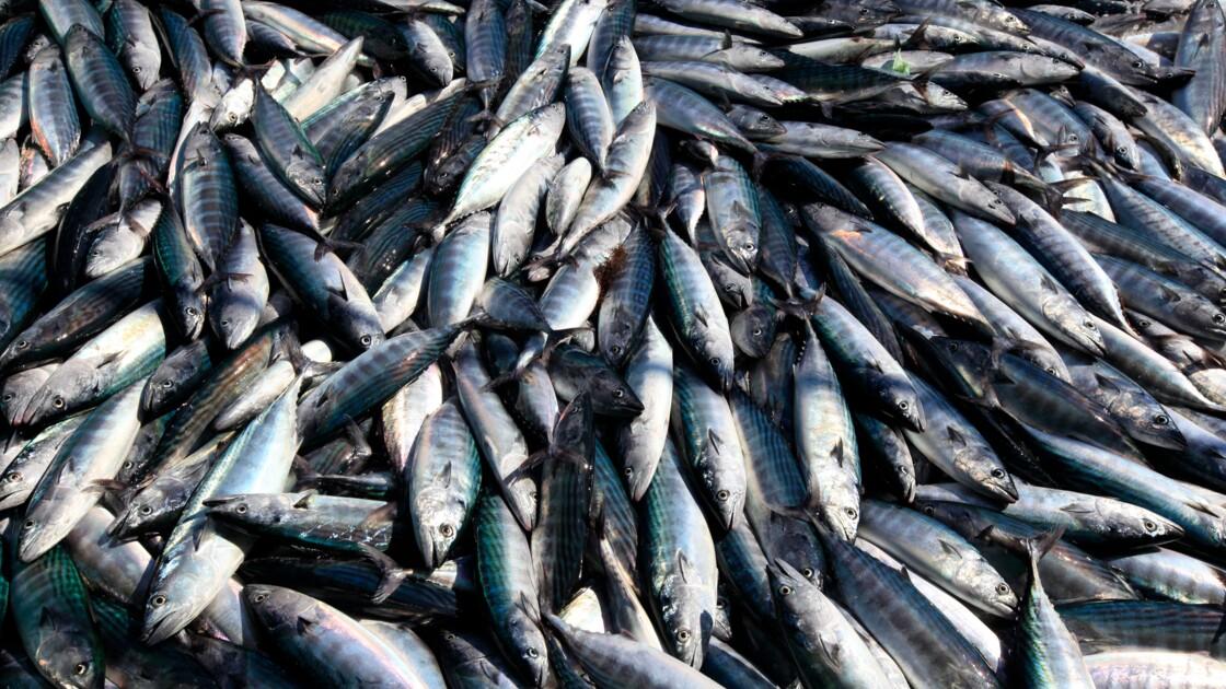 Atlantique: l'interdiction de certaines pêches sera plus systématique