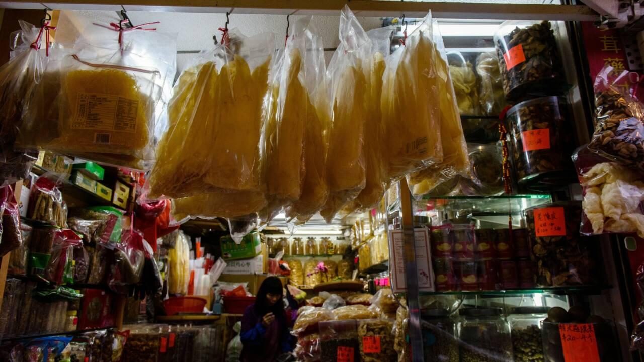 Hong Kong: énorme saisie d'ailerons de requins