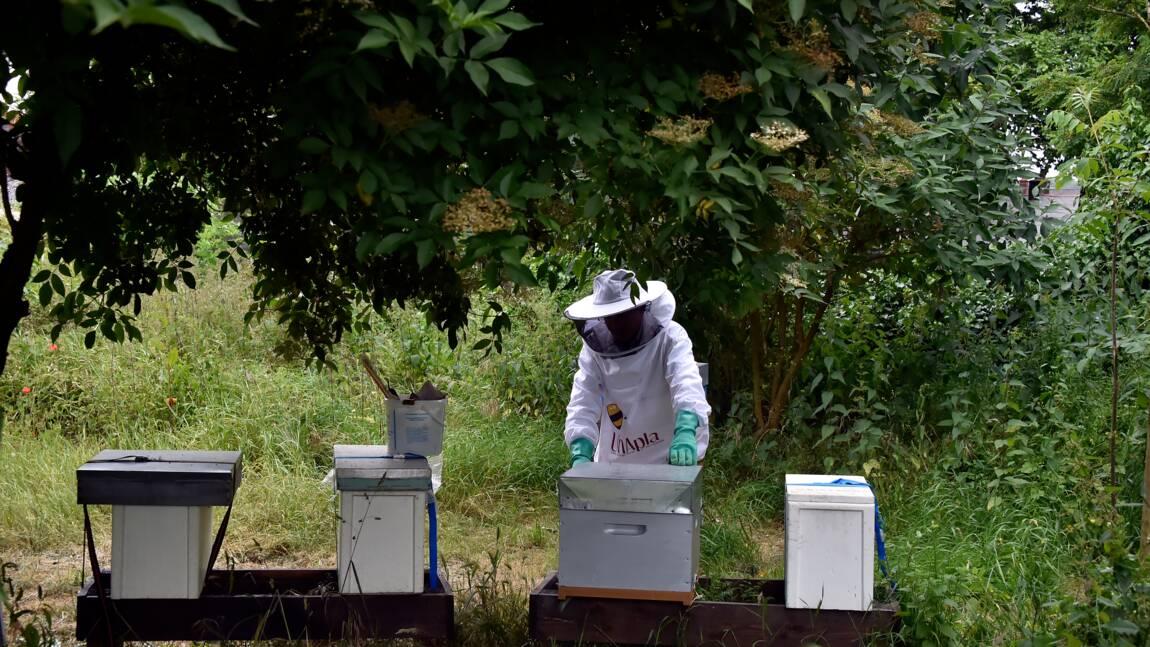 """Trois choses à savoir sur les néonicotinoïdes, ces insecticides """"tueurs d'abeilles"""""""